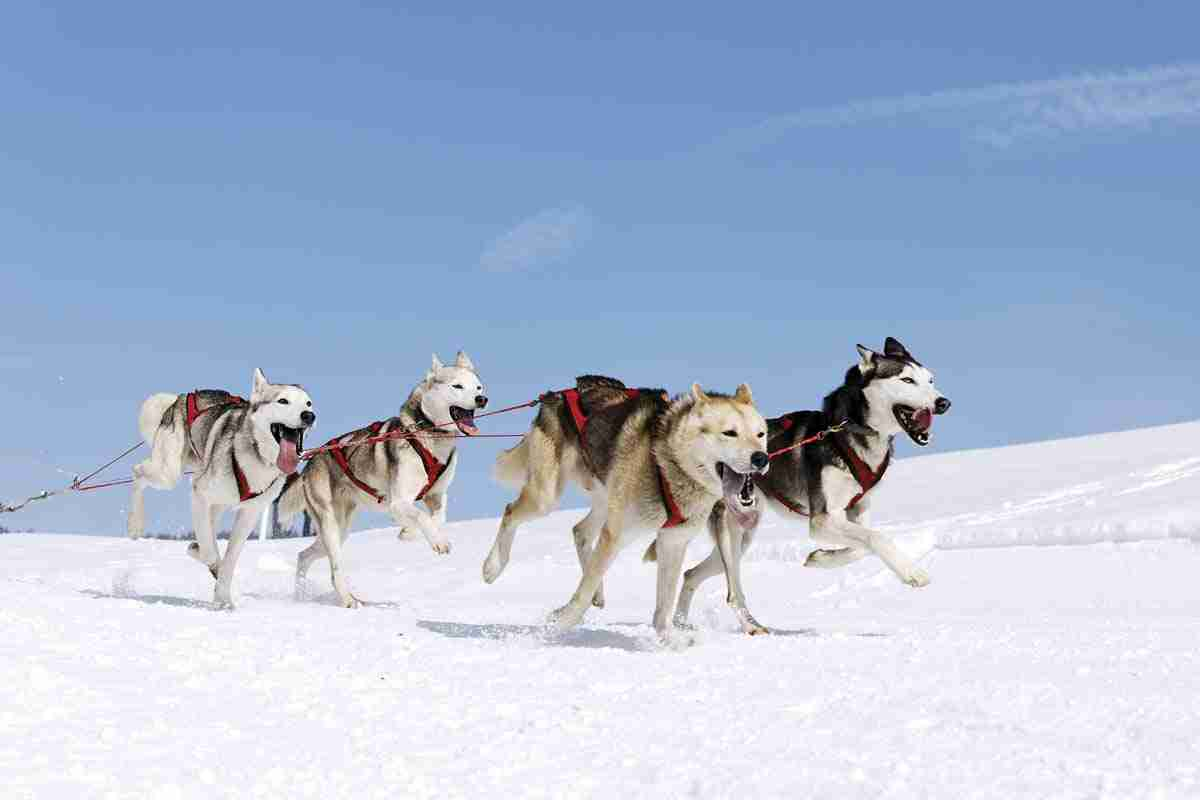 Dog Sledding in Alaska, Luxury Cruising in Alaska